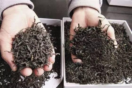 专家教你如何分辨陈茶、残茶