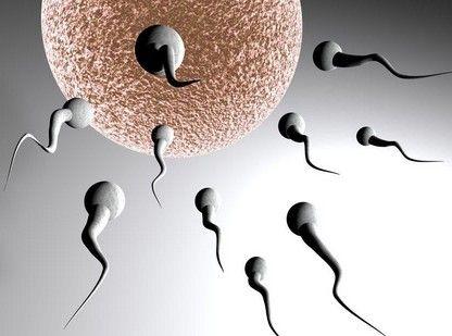 精子在女性体内是啥样