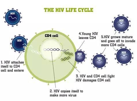 小四(CD4 T淋巴细胞)波动,我该怎么看?