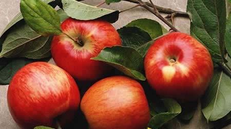 一天可以吃两个苹果吗?吃一个苹果多久时间好