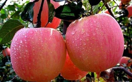 全世界人都爱它  一天吃几个苹果最好